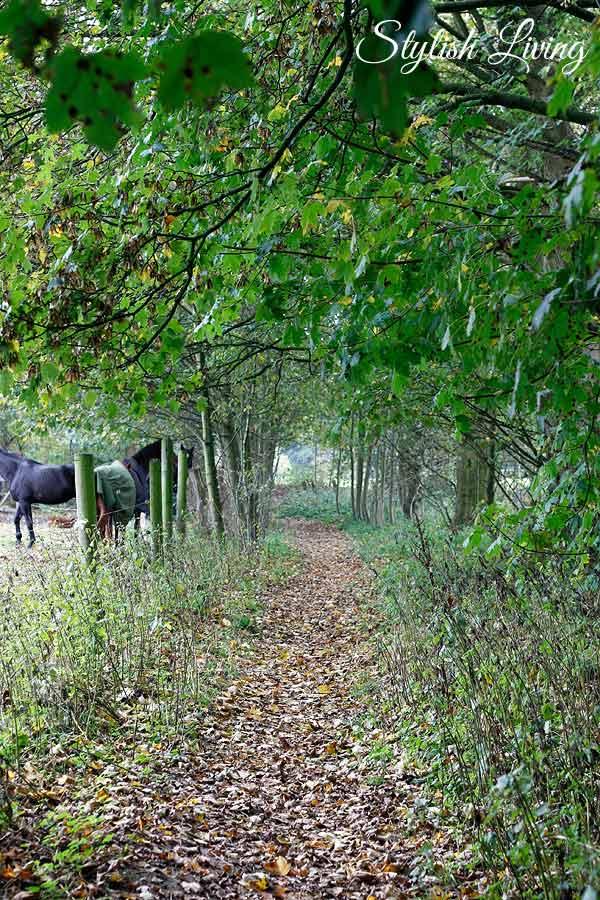 Naturschutzgebiet Hainesch-Iland