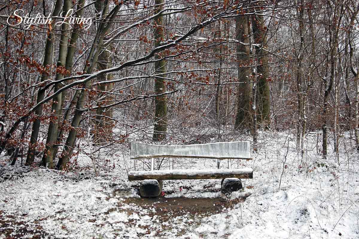 Holzbank im Elm