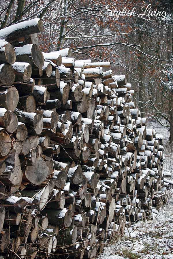 Holzhaufen im Elm