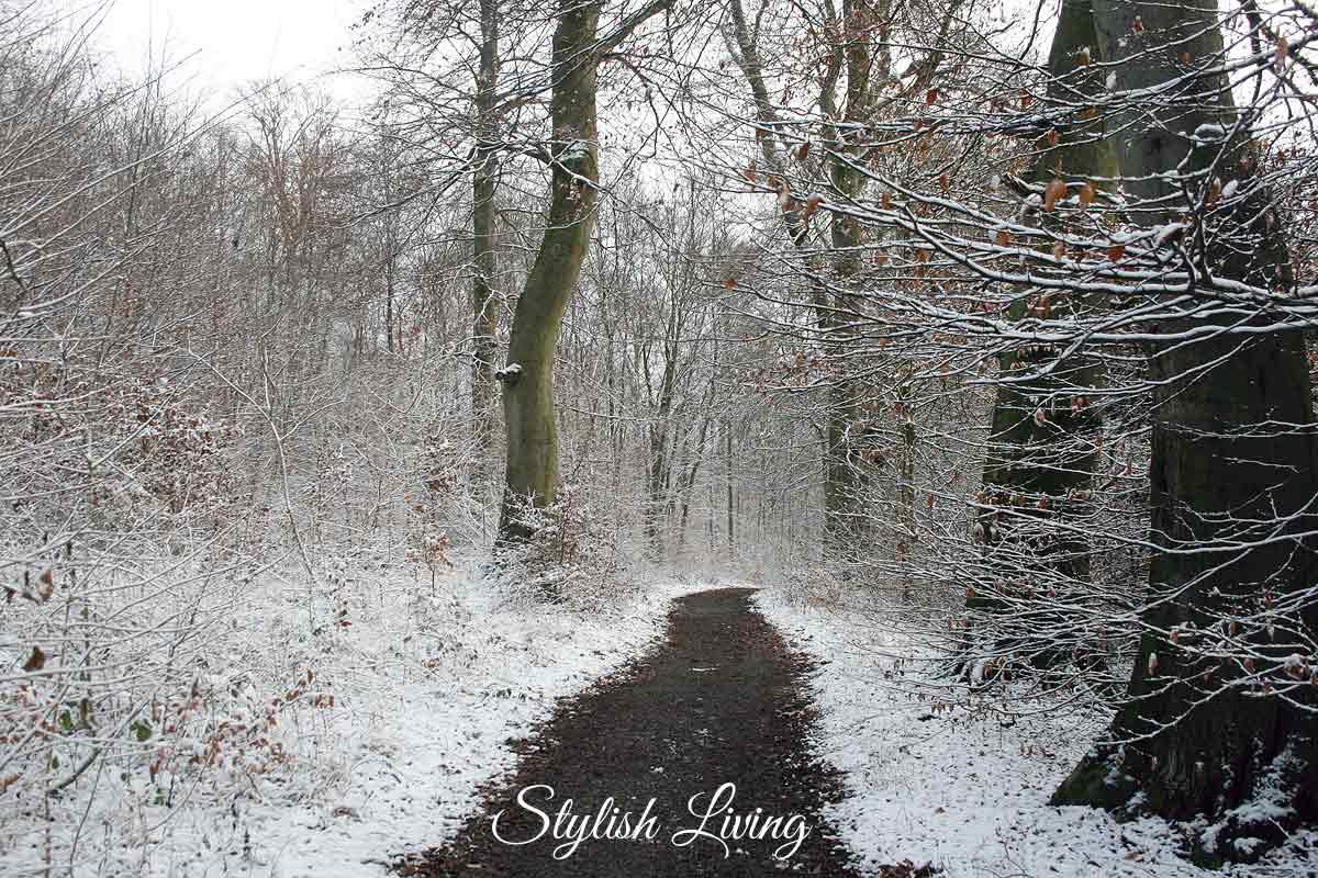 Schnee-Waldweg im Elm