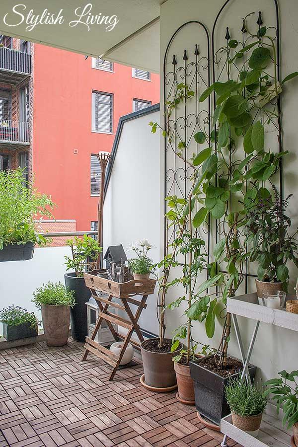 Kletterpflanzen auf dem Balkon