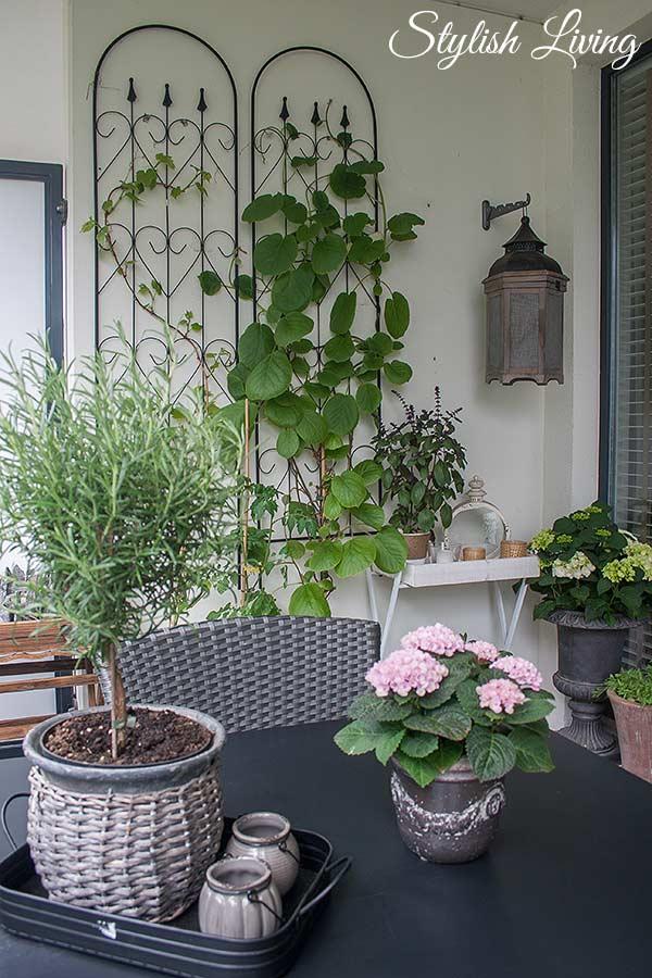 balkonbegr nung und kletterpflanzen die jede wand. Black Bedroom Furniture Sets. Home Design Ideas