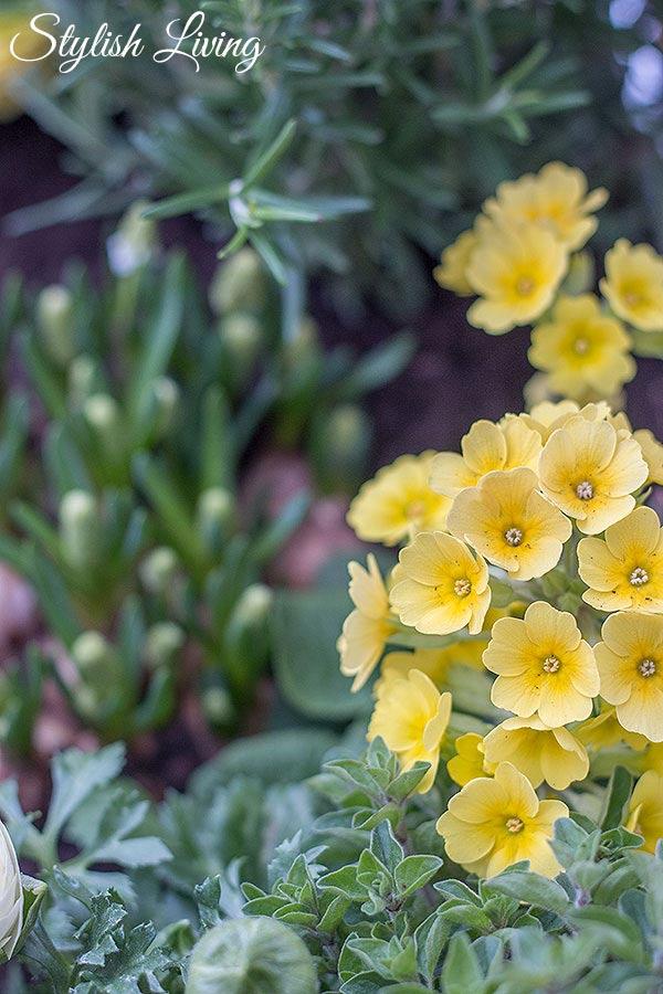 Kräuter-Blumen-Mix im Hochbeet