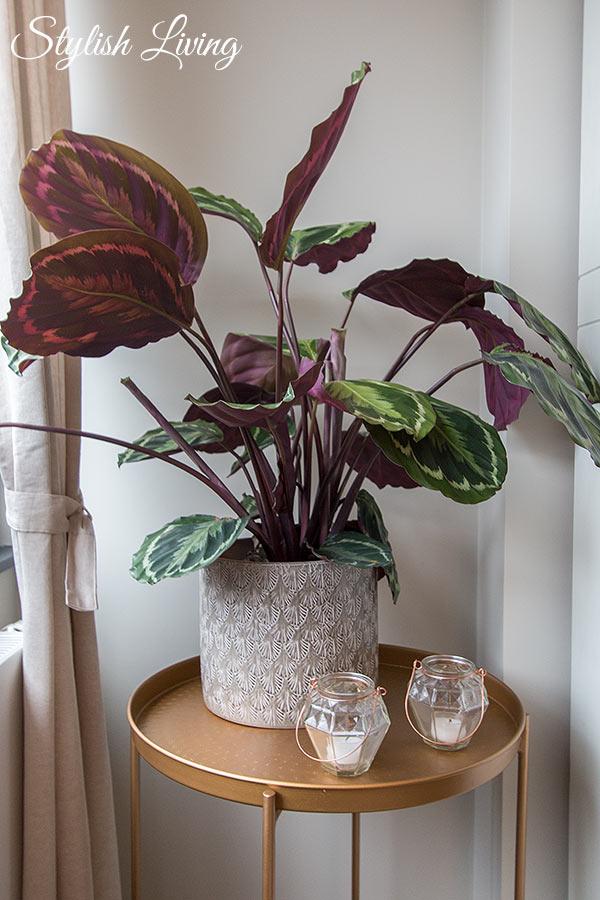 Zimmerpflanzen im Büro sorgen für ein gutes Klima