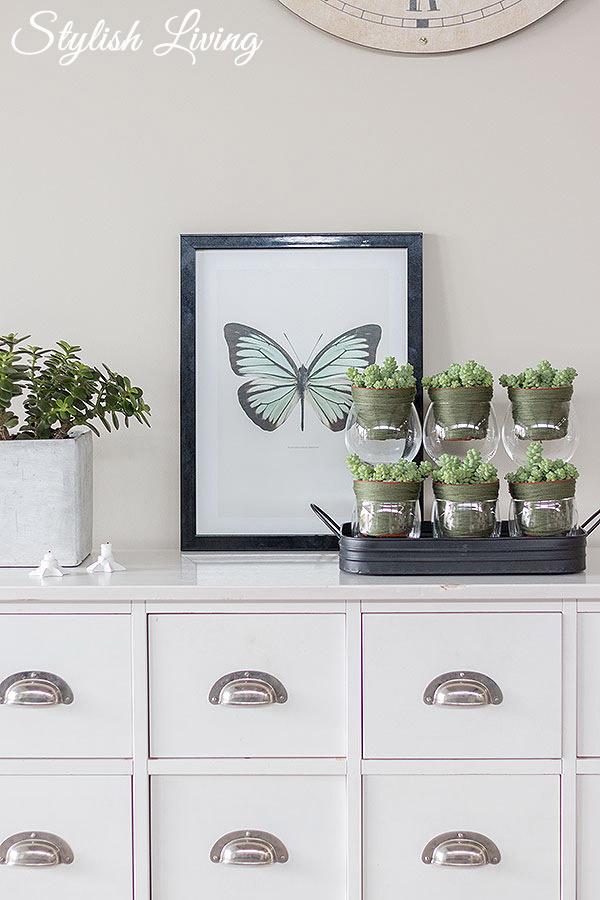 Sukkulenten im Wohnraum dekorieren