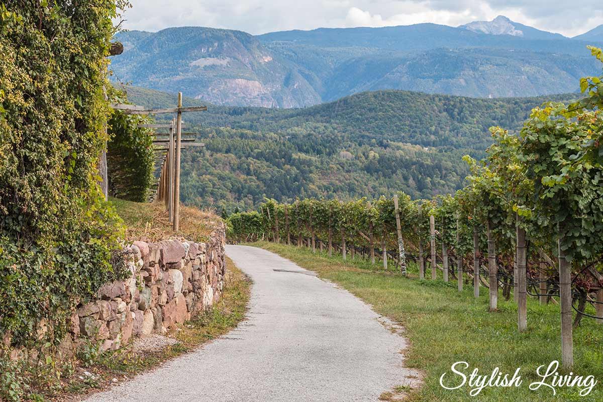 Weinberge Kaltern Südtirol