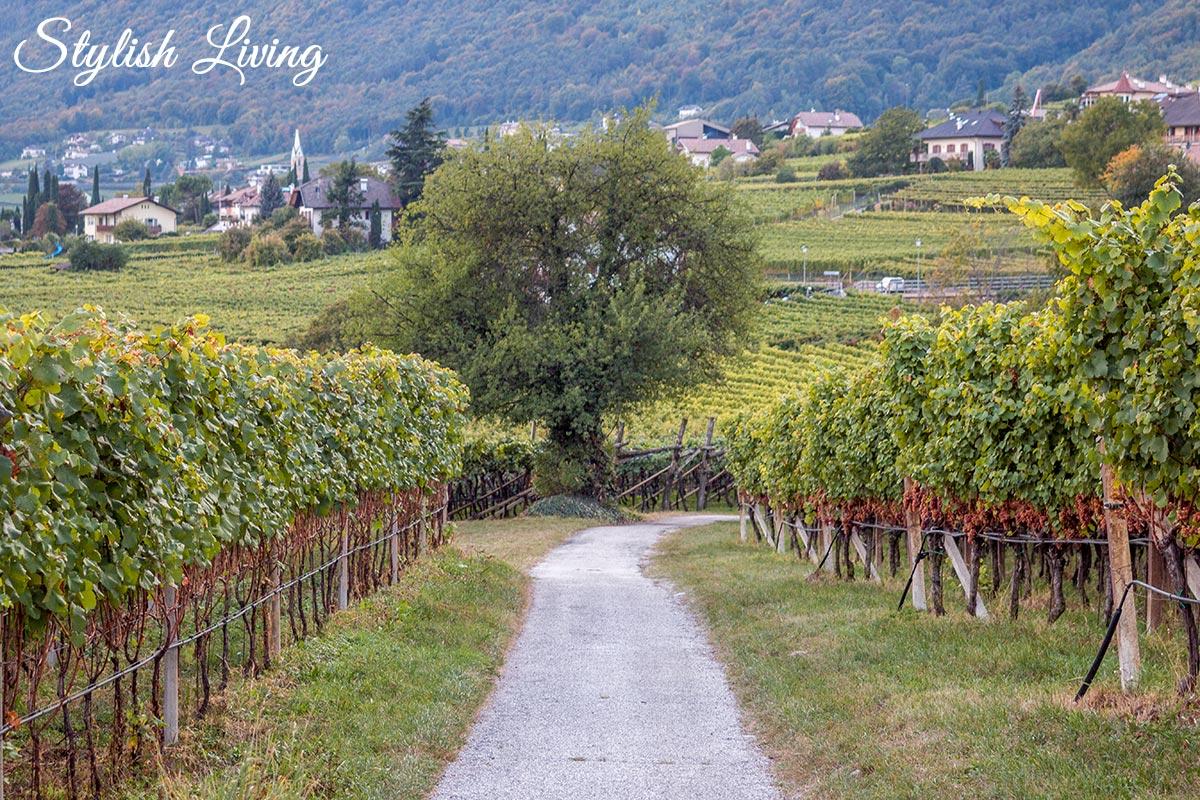 Weinberge Kaltern am See Südtirol