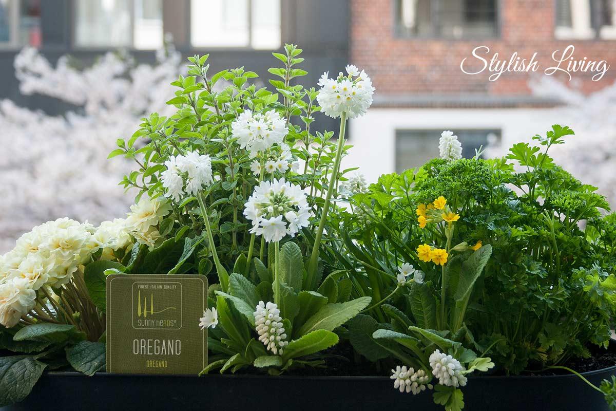Balkonkasten mit Blumen und Kräutern