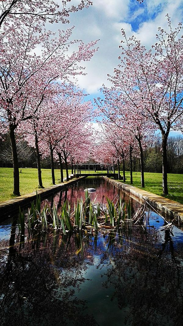 Kirschblütenzeit von Yvonne