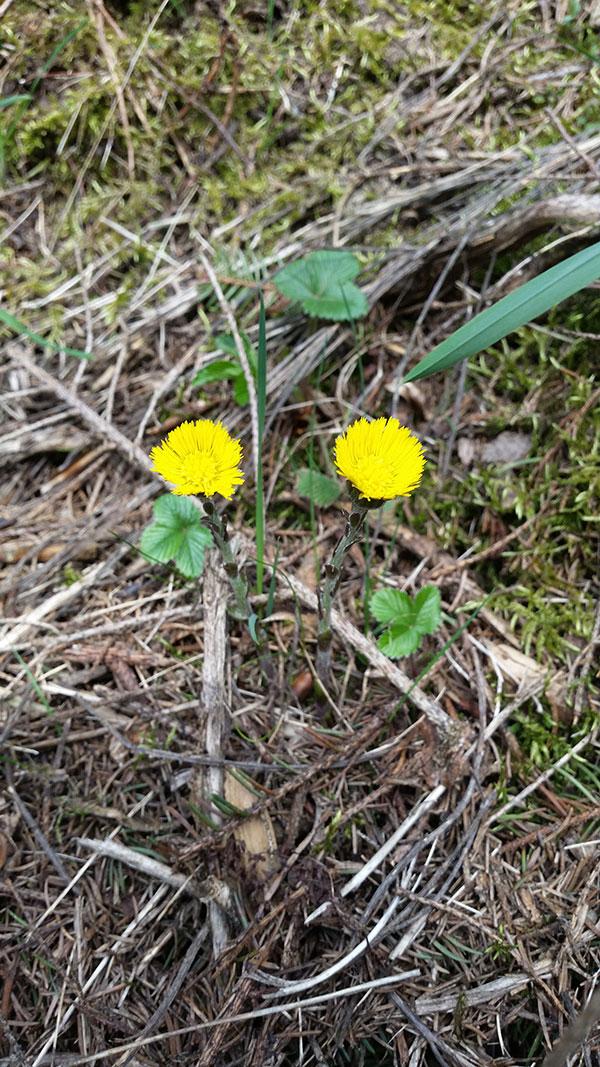 Frühlingsblumen im Wald von Jessica