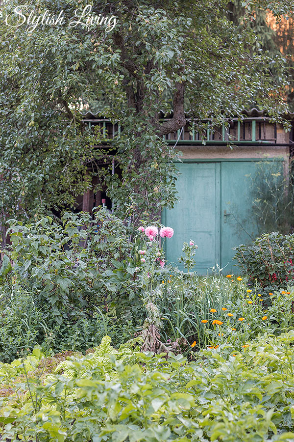 Omas wilder Garten