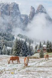 Pferde im Winter vor dem Schlern