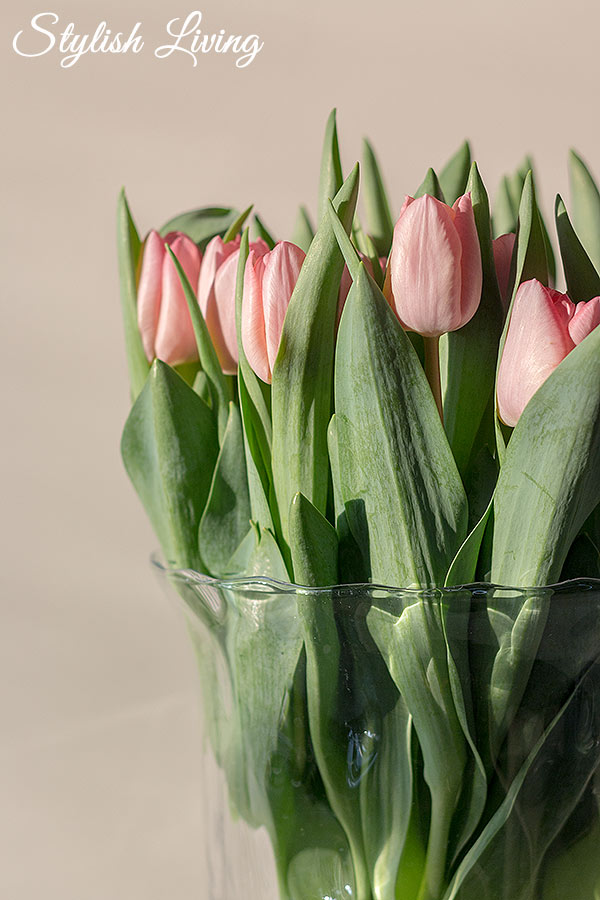 Tulpenstillleben