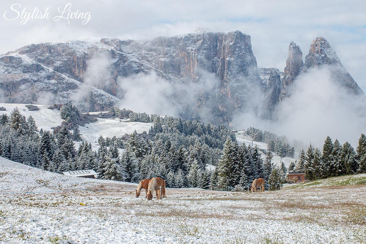 Winterlandschaft Schlern mit Pferden