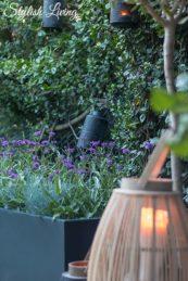 Pflanzgefäß MAXI von VIVANNO mit Verbenen und Blauschwingel bepflanzt