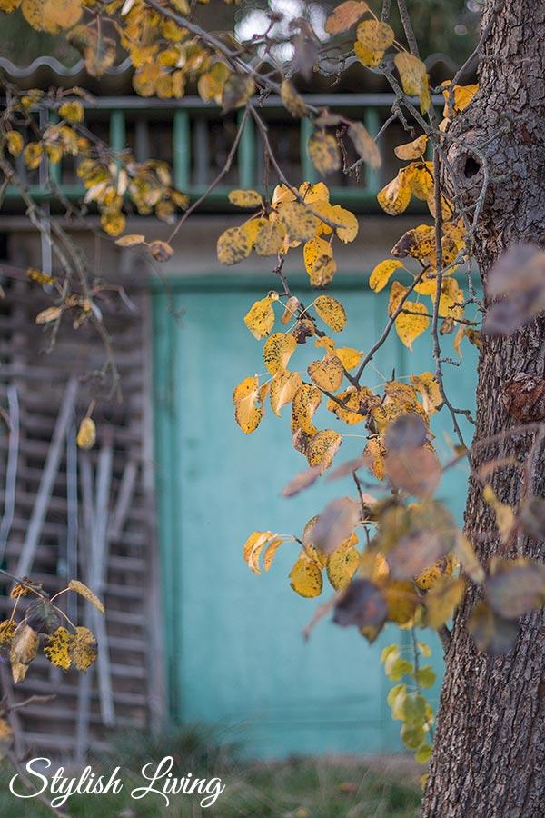 Herbst in Lieblingsomas Garten
