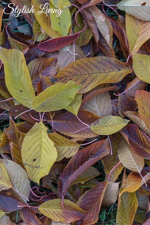 Herbstlaub im November in Lieblingsomas Garten