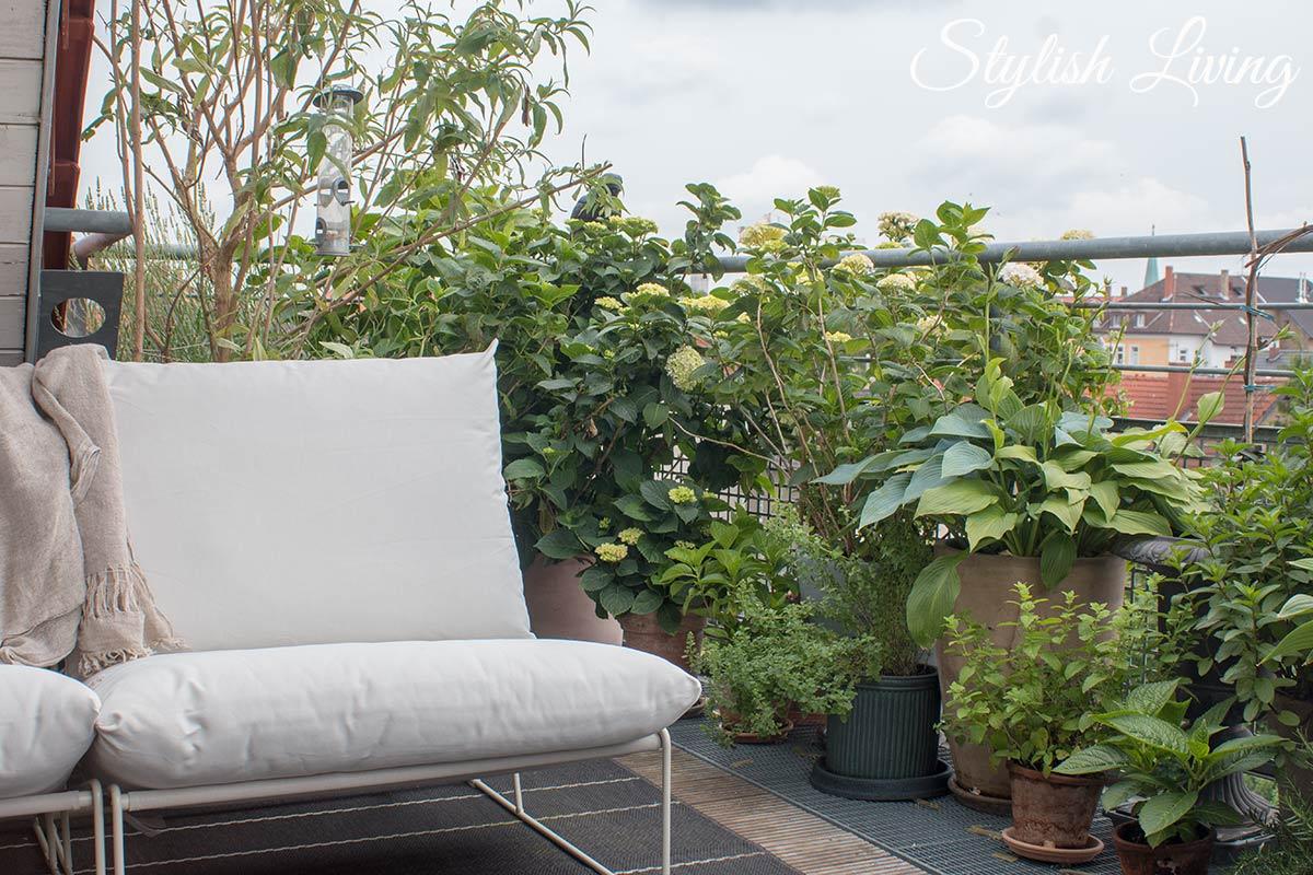 Dachterrasse gestalten mit Pflanzen - Hortensien, Schmetterlingsflieder