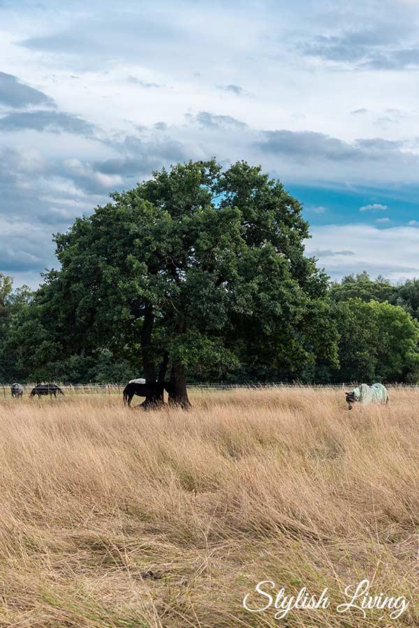 Picknick in idyllischer Natur neben einer Pferdewiese
